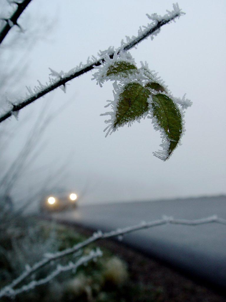 Frostiger Zweig ragt in eine Straße