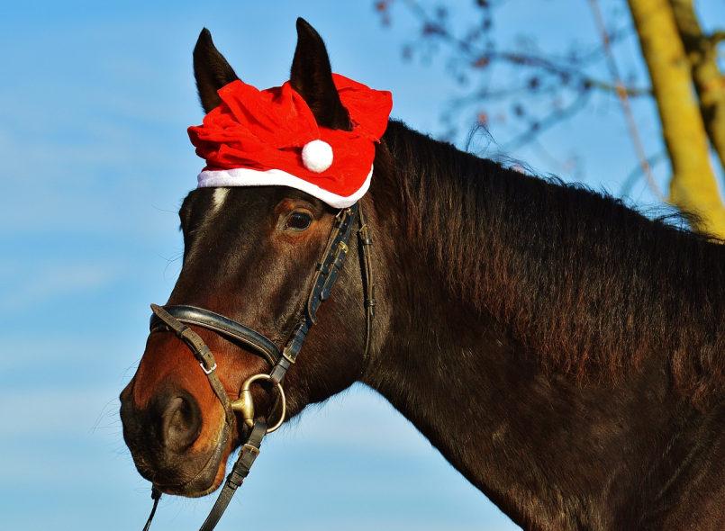 Pferdekopf. Das Pferd trägt eine Nikolausmütze. Hintergrund: blauer Himmel.