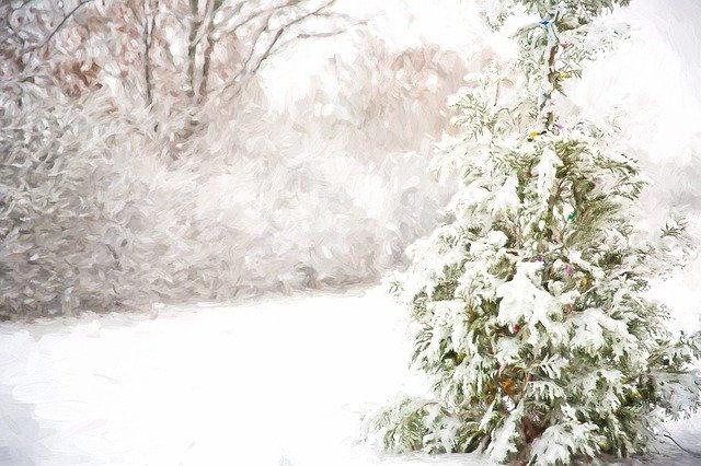 Ein Winterwald. Schneebedeckte Bäume. Im Vordergrund eine Fichte.