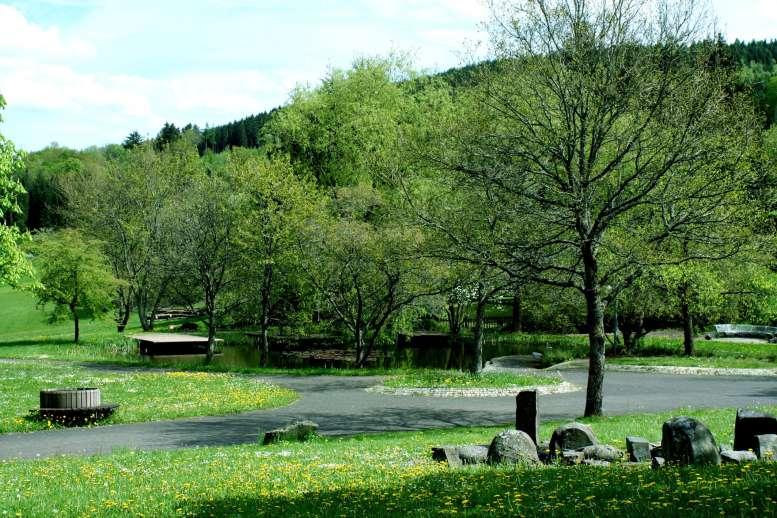 Wiese, Bäume, Park