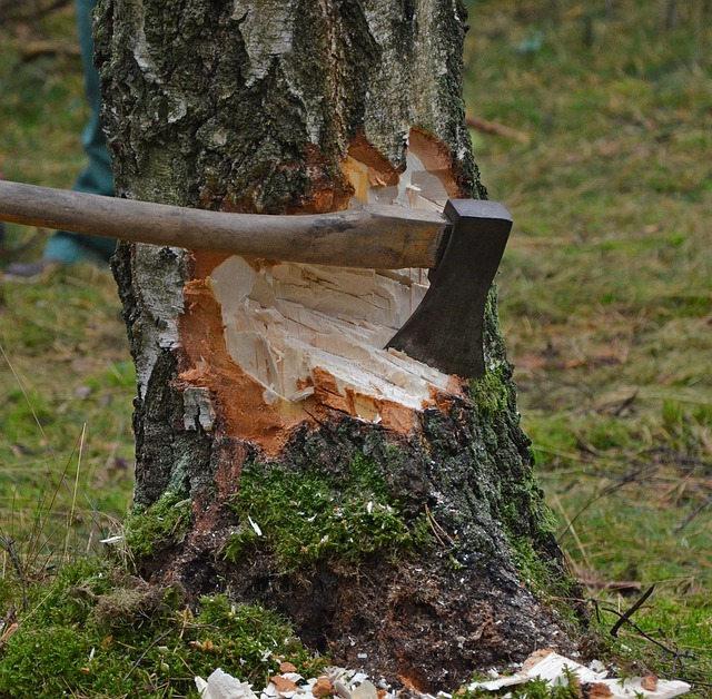 Axt die einen Baum stark beschädigt hat
