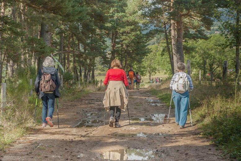 Frauen mit Walkingstöcken unterwegs im Wald