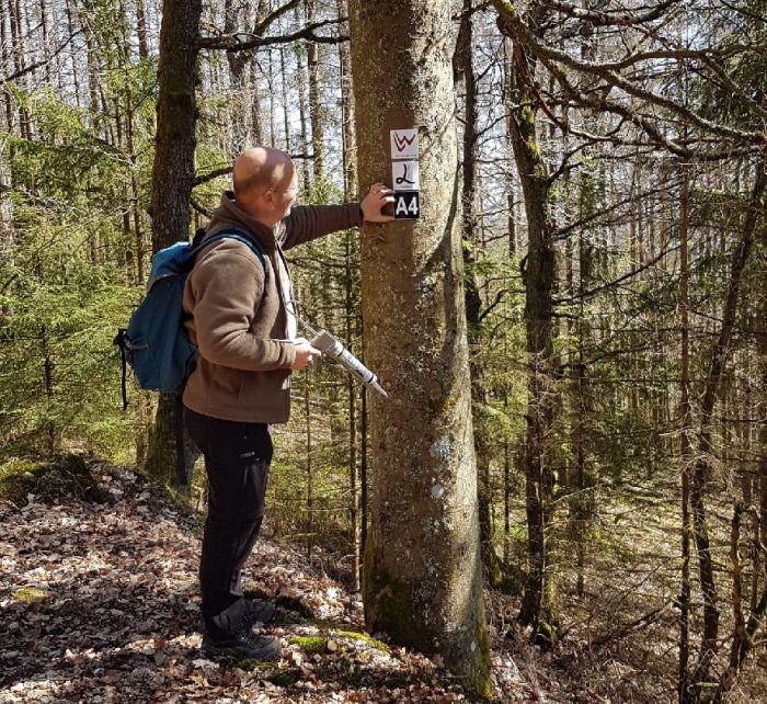 Mann bringt Symbolschilder an Bäumen an