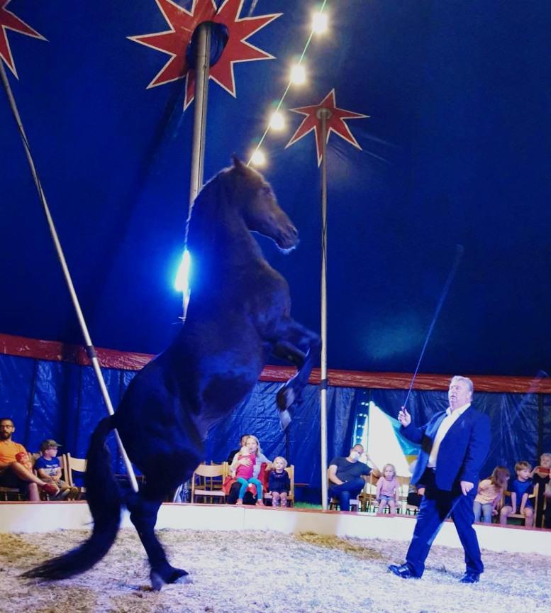Pferd und Dompteur im Zirkus