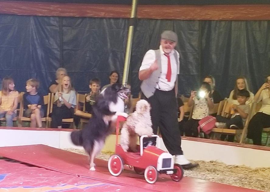 Hund schiebt ein Auto in dem ein anderer Hund sitzt
