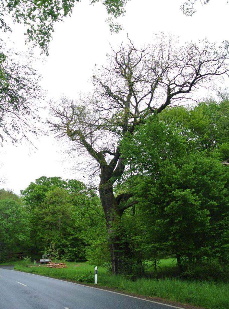 Stück Kreisstraße von Bäumen gesäumt