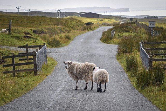 2 Schafe und dahinter ein Aussiedlerhof